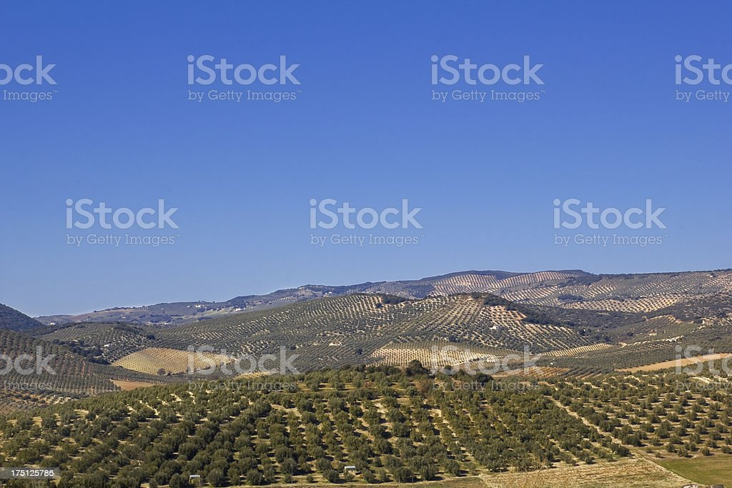 Panorama of the fields in Andalusia. royalty-free stock photo