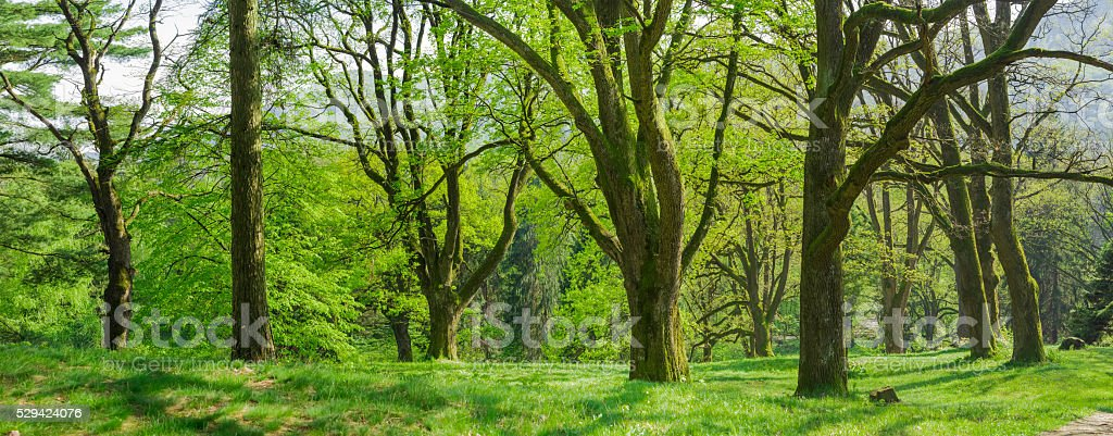 Panorama of the old park in the spring morning stock photo