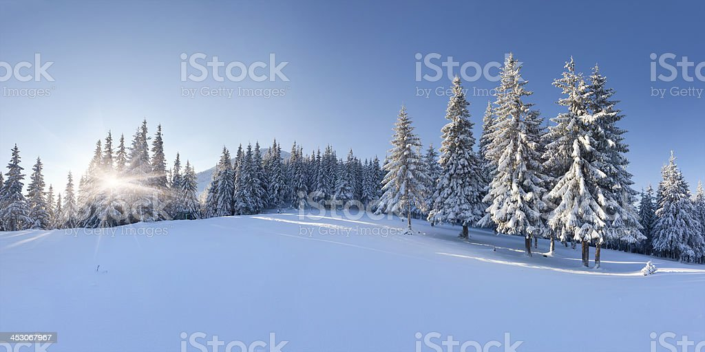 Panorama of the winter morning stock photo