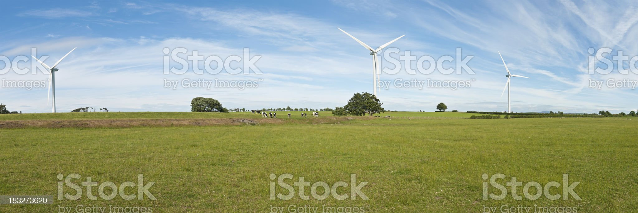Panorama of three Wind Turbines with Cows royalty-free stock photo