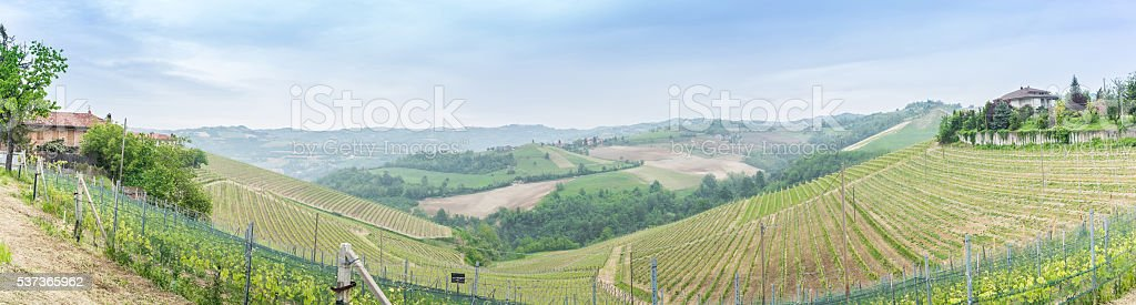 Panorama of vineyard stock photo