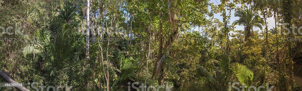 Panorama of West Mexican Lowland Wet Forest stock photo