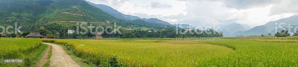 Panorama on the harvest season at Tu Le town stock photo