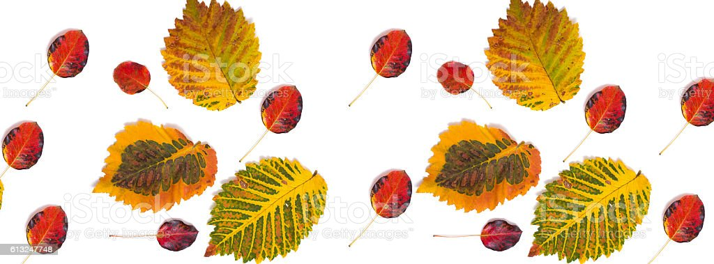 panorama pattern multicolored autumn leaves stock photo