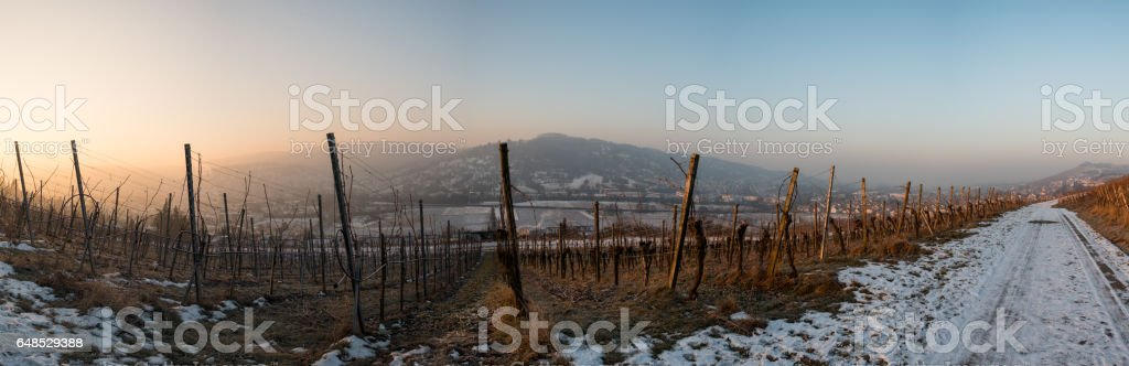 Panorama sunrise in winter in a vineyard stock photo