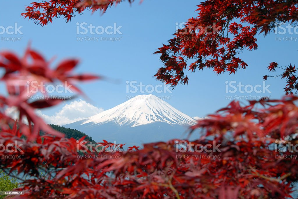 Panorama view of Mountain Fuji and red trees royalty-free stock photo