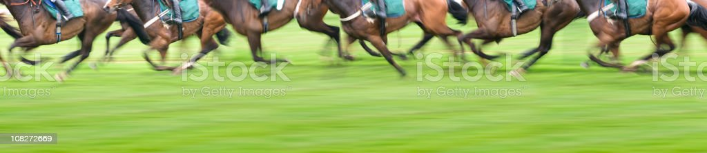 Panorama View of Race Horses stock photo