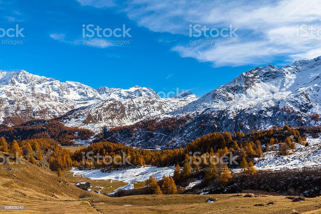 Panorama view of Sils lake in golden autumn stock photo