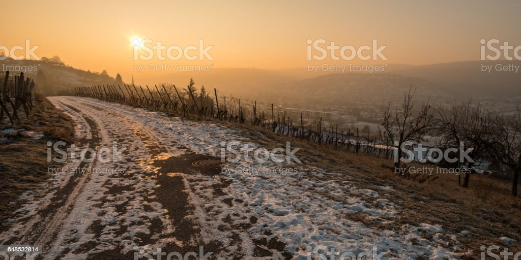 Panorama vineyard with sunrise in winter with snow stock photo