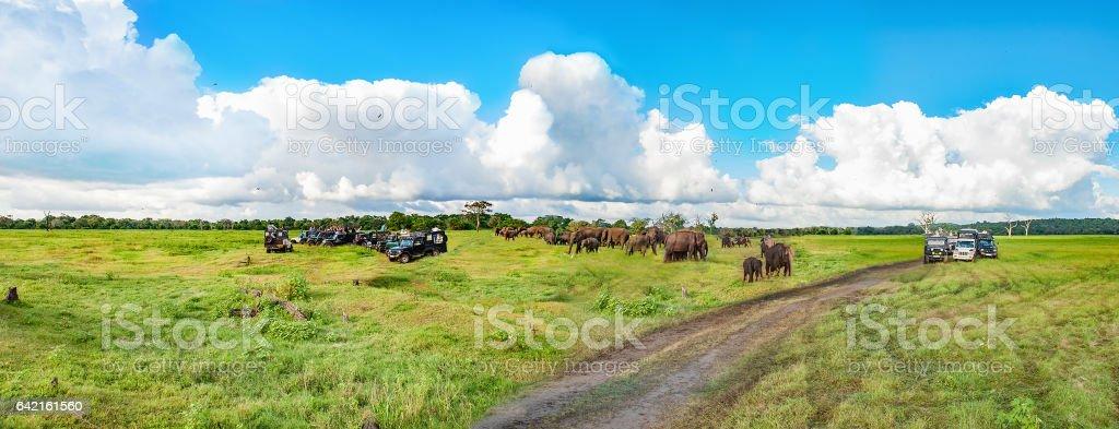 Panorama with elephants and jeeps safari stock photo