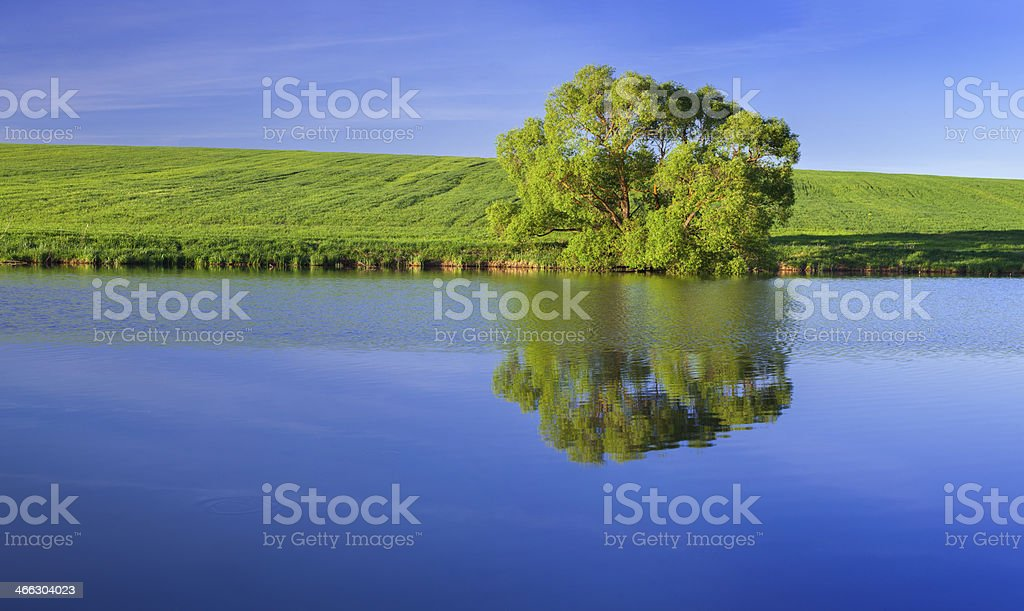Panorama with lonely tree on the green summer meadow on the lake royalty-free stock photo