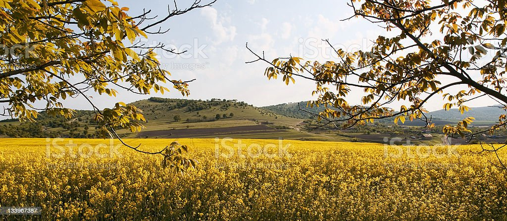 Panorama with yellow meadow, mountains and sky royalty-free stock photo