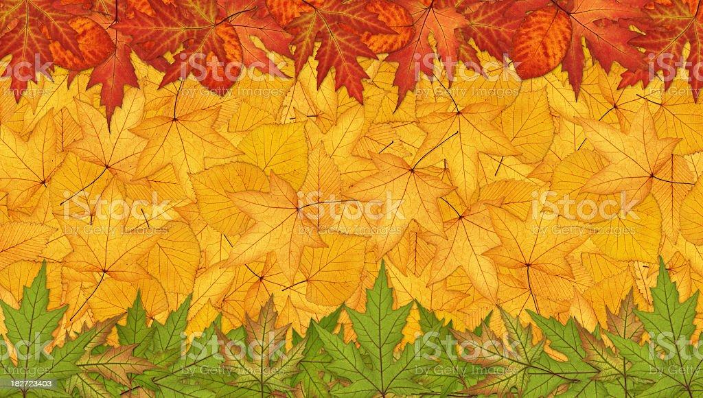 Panoramic Autumn Background royalty-free stock photo