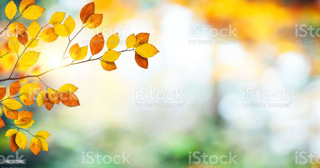 Panoramic Autumn Background stock photo
