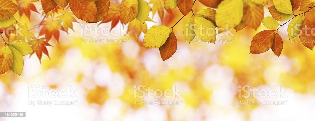Panoramic Autumn Foliage royalty-free stock photo