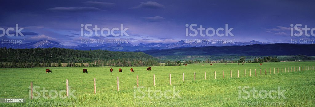 Panoramic Cattle Ranch royalty-free stock photo