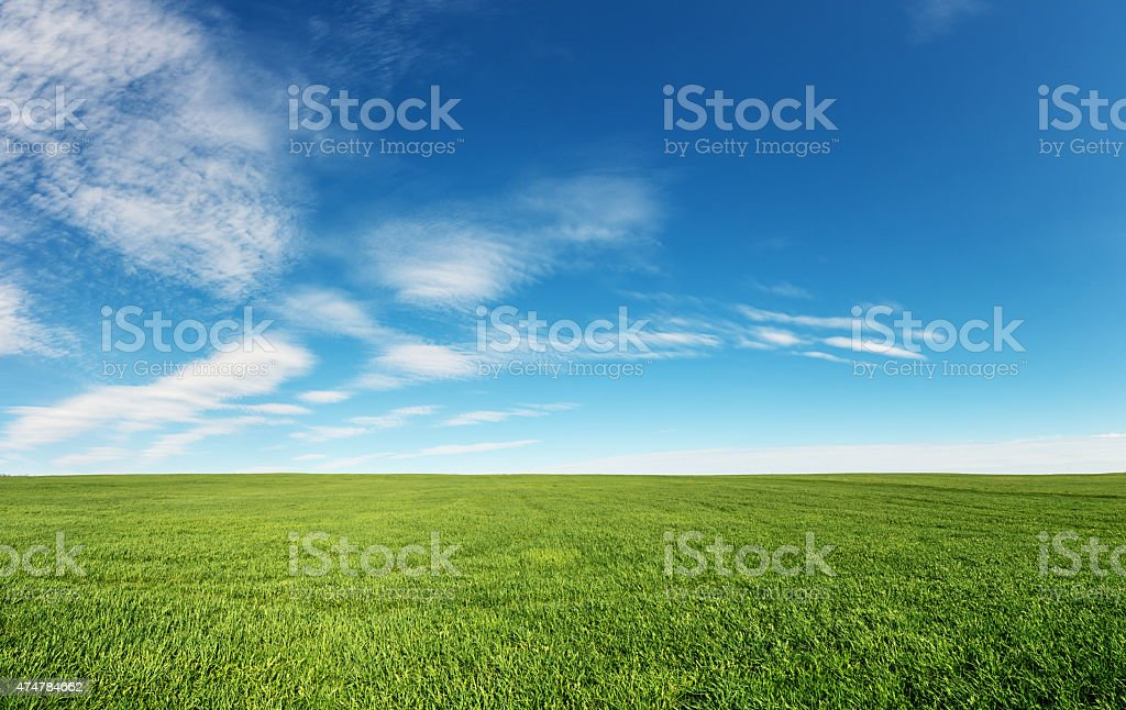 Panoramic Fieldscape stock photo