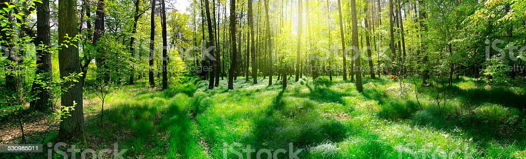 Panoramic image of the forest stock photo