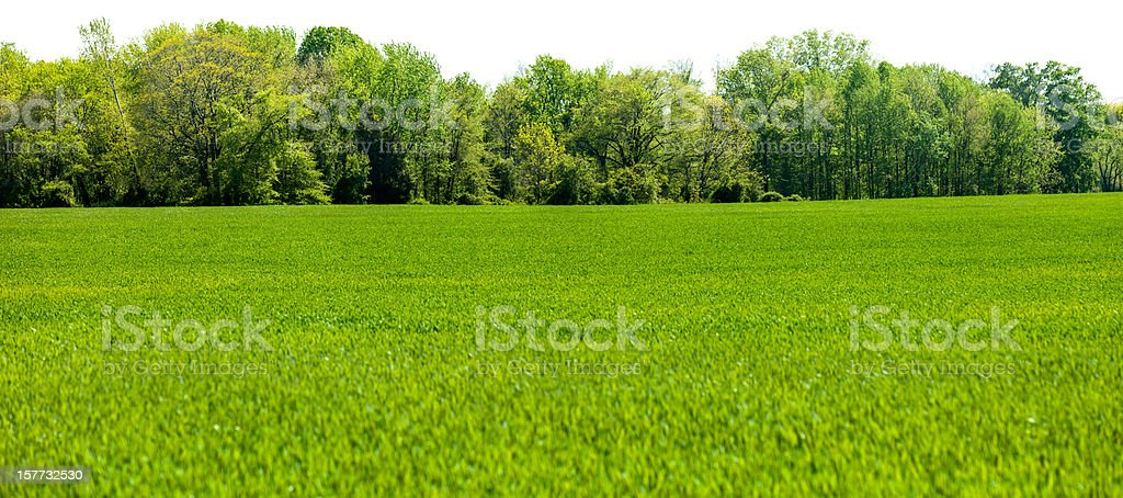 Panoramic Isolated Springtime Tree line with Grass Field Foreground royalty-free stock photo