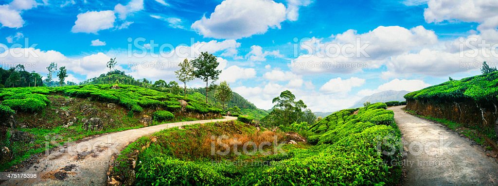 Panoramic Landscape of Tea Plantations in Munnar, India stock photo