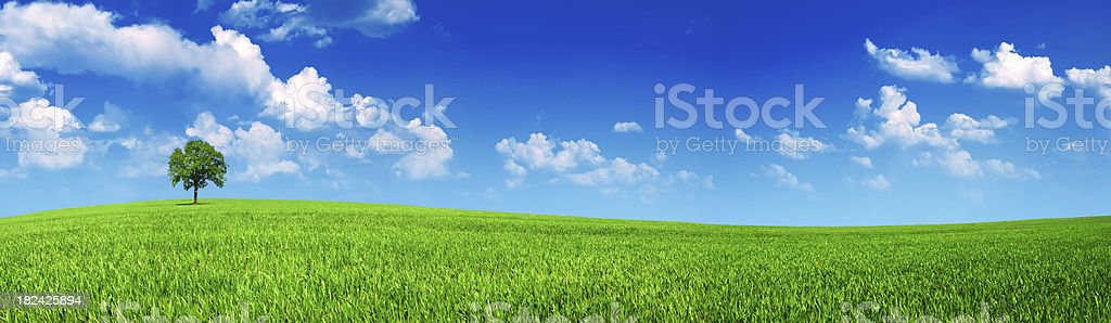panoramic meadow royalty-free stock photo