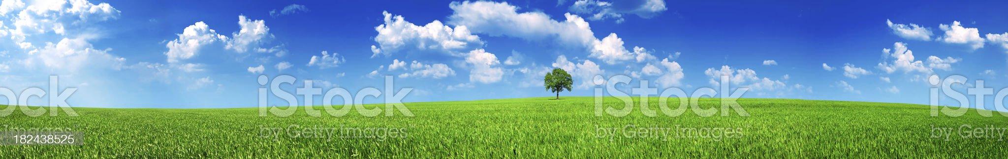 panoramic meadow royalty-free stock photo