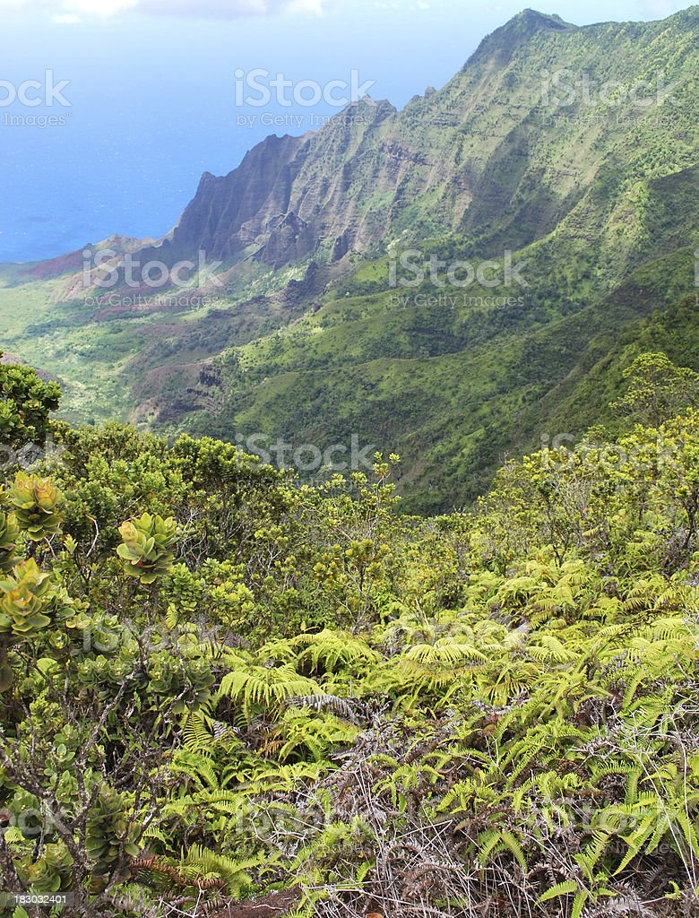 Panoramic Na Pali Coast in Kauai, Hawaii. stock photo