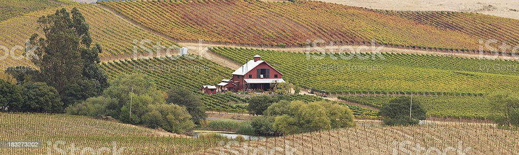 Panoramic Napa Valley Landscape royalty-free stock photo