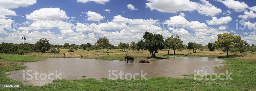 panoramic natural pan photograph, with african elephants swimming and drinking royalty-free stock photo