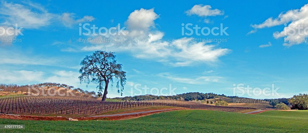 Panoramic Paso Robles Tree and Clouds stock photo