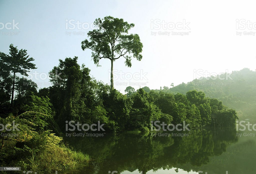 Panoramic Rainforest royalty-free stock photo