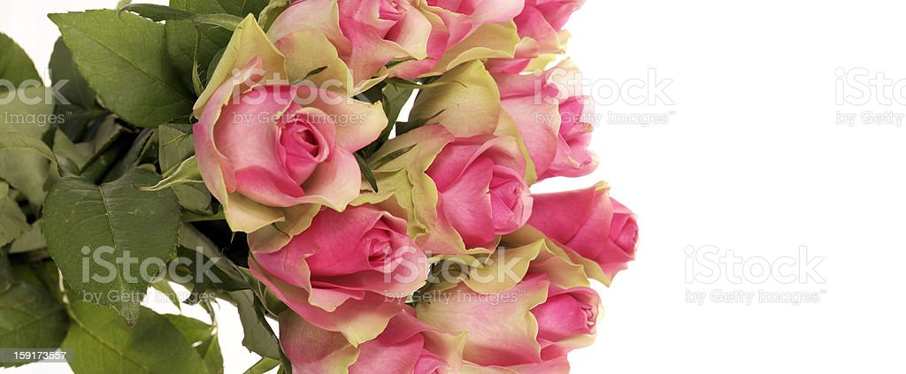 panoramic roses royalty-free stock photo