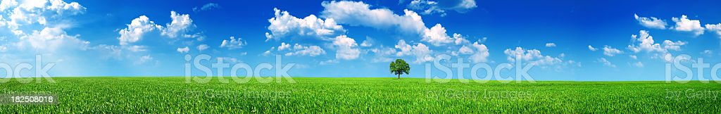 A panoramic shot of a meadow with a tree on a sunny day royalty-free stock photo