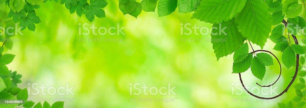 Panoramic Spring Foliage royalty-free stock photo