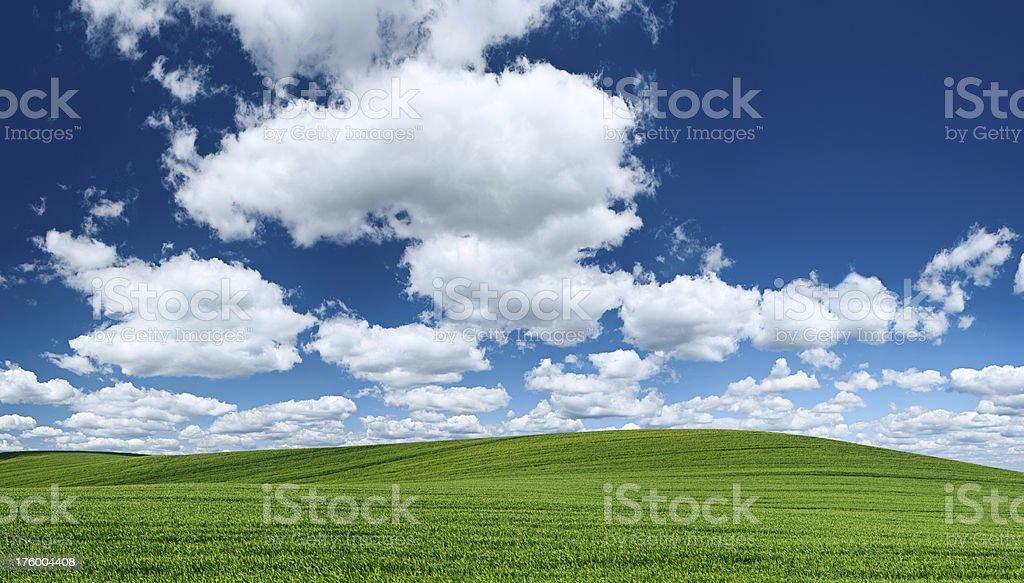 Panoramic spring landscape 102 MPix XXXXL - meadow, blue sky royalty-free stock photo