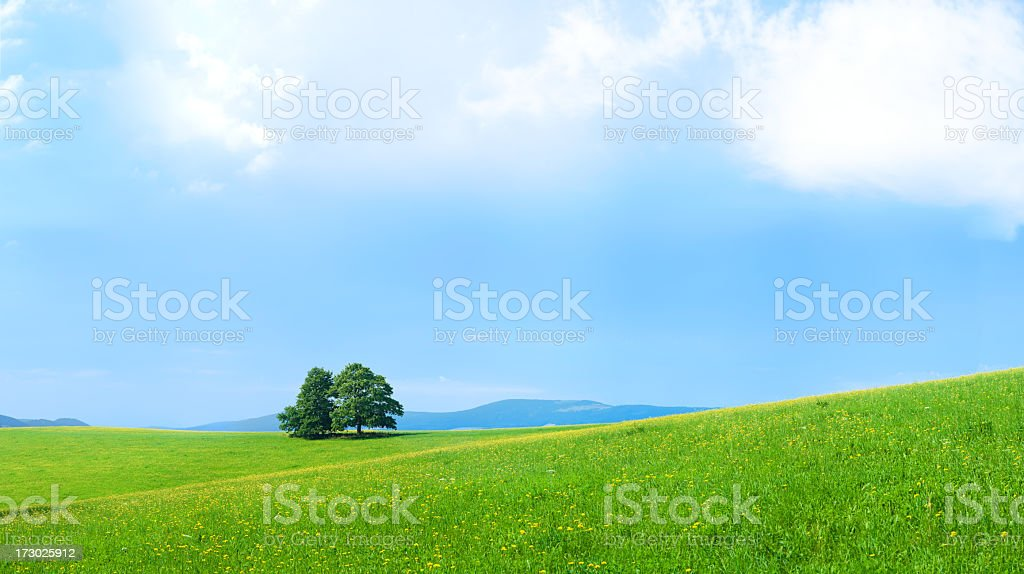 Panoramic spring landscape 102MPix XXXXL meadow, blue sky, clouds royalty-free stock photo
