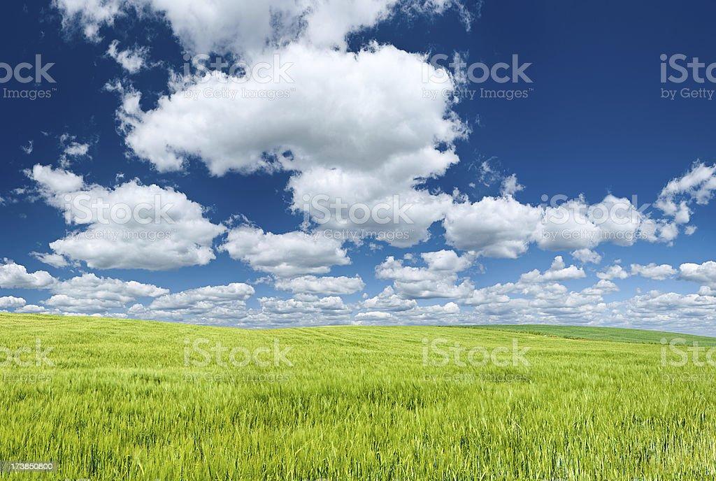 Panoramic spring landscape 115MPix XXXXL - meadow, blue sky, clouds royalty-free stock photo