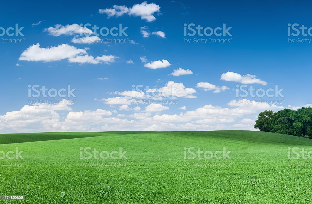 Panoramic spring landscape 51MPix - meadow, blue sky royalty-free stock photo