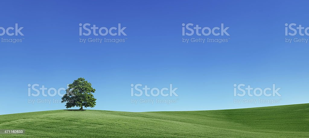 Panoramic spring landscape 55MPix - XXXXL size stock photo