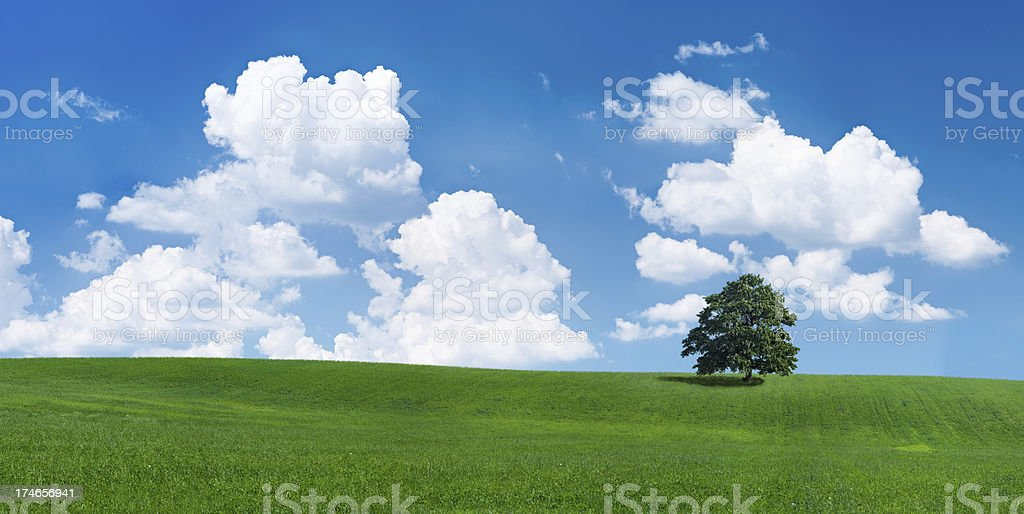 Panoramic spring landscape 60MPix - XXXXL size royalty-free stock photo