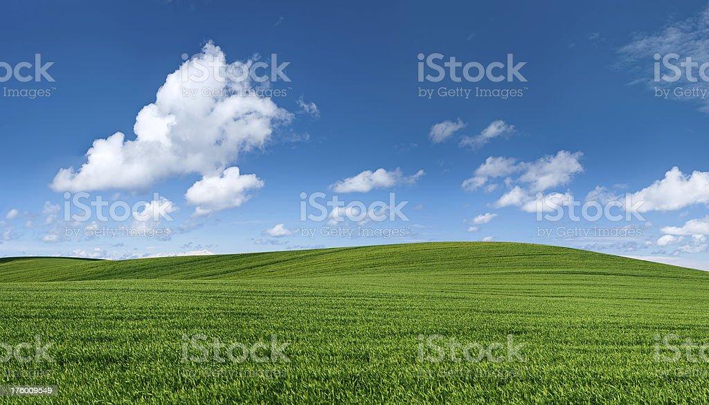 Panoramic spring landscape 62MPix XXXXL - meadow, blue sky royalty-free stock photo