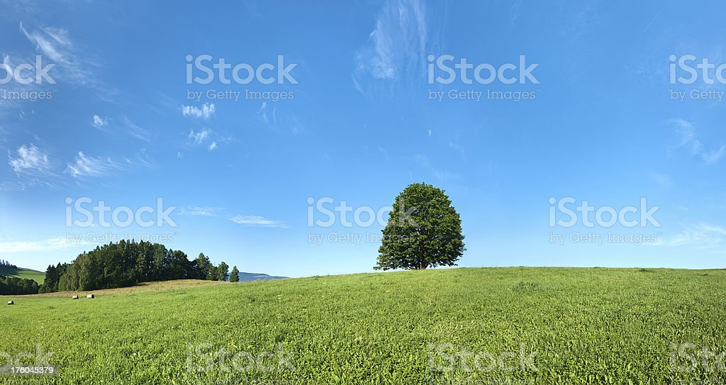 Panoramic spring landscape 66MPix XXXXL size - lonely tree, meadow royalty-free stock photo