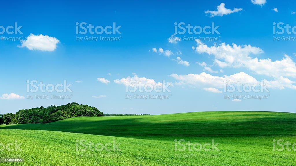 Panoramic spring landscape 80MPix XXXXL - green field, blue sky royalty-free stock photo