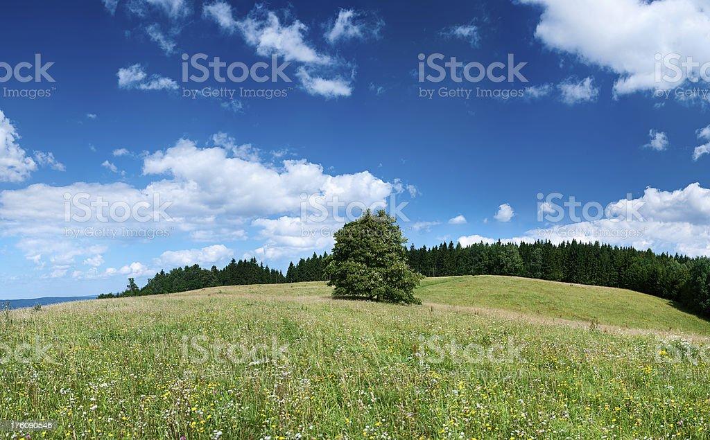Panoramic spring landscape 85MPix XXXXL size - meadow, blue sky royalty-free stock photo