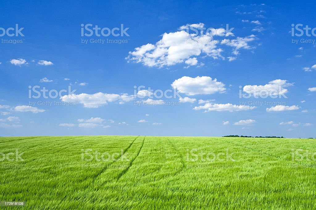 Panoramic spring landscape  - meadow, blue sky and white clouds royalty-free stock photo