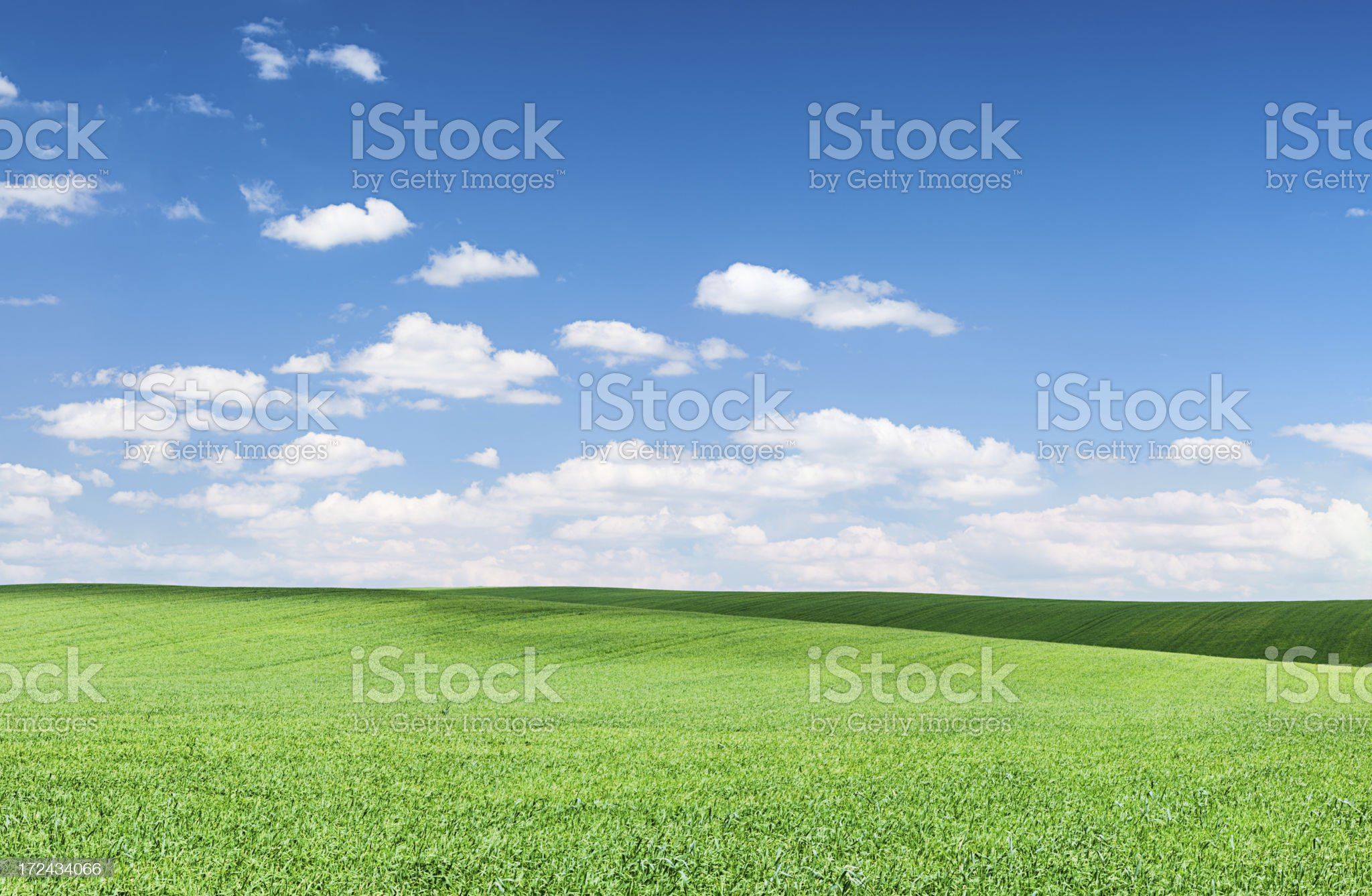 Panoramic spring landscape - meadow, blue sky royalty-free stock photo