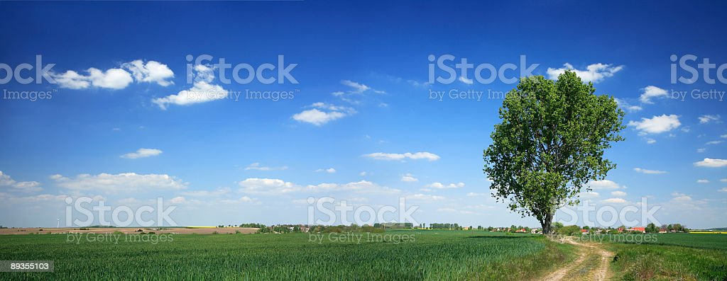 Panoramic Spring Landscape royalty-free stock photo