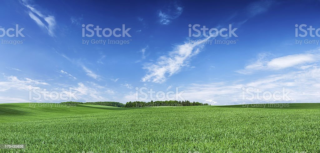 Panoramic spring landscape XXXXL 68 MPix- green field, blue sky stock photo