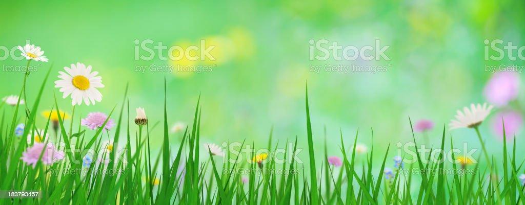 Panoramic Spring Meadow stock photo
