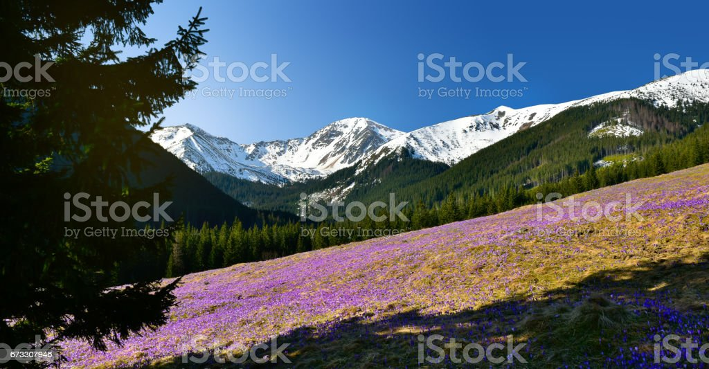 Panoramic spring view of chocholowska valley in Tatra mountain. stock photo